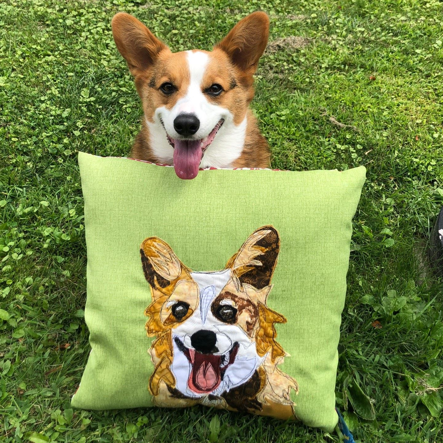 Petey sitting outside with his prize pillow