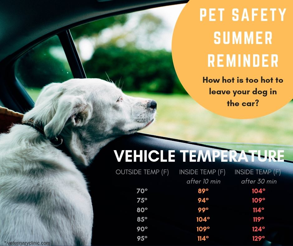 Summer Temp Pet Reminder FB
