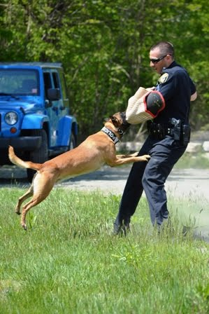 Dog Simulating Attack With Officer